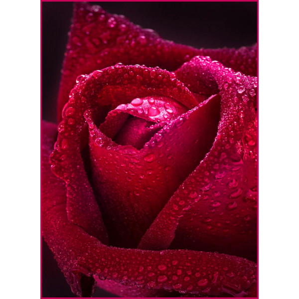 ФОТОобои 134*98см Бархатная роза 2л